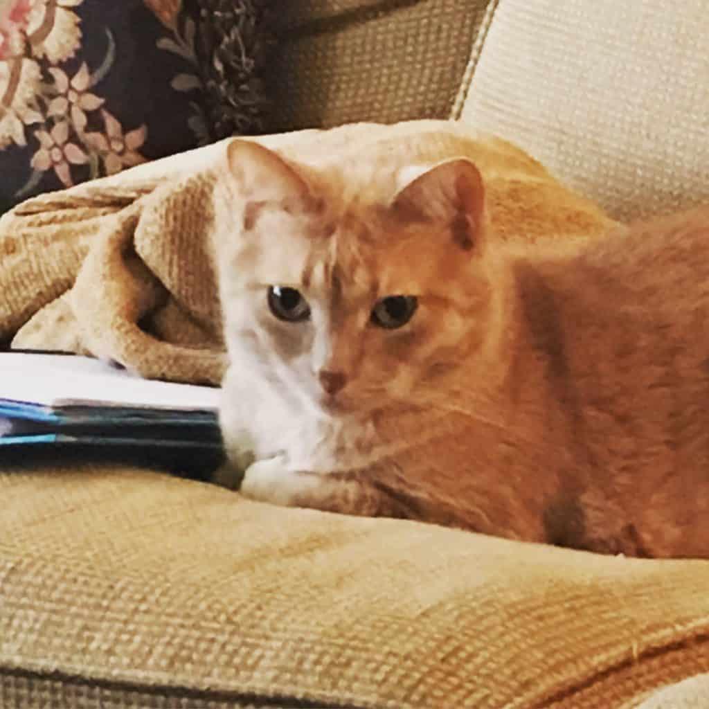 Lola on the Sofa Watching Milo